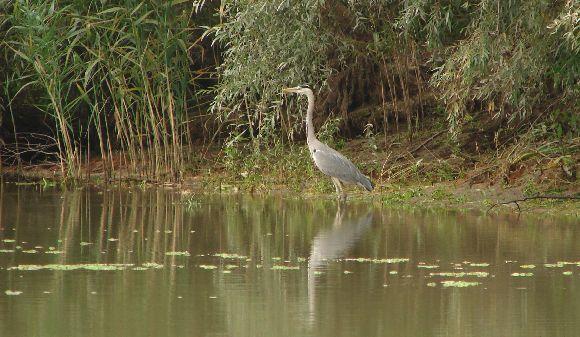 Egyes élőlényeknek a csönd életet jelent...